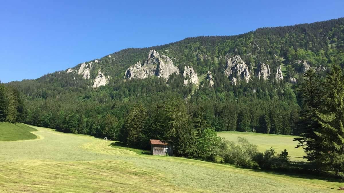 Wiese in den Bergen