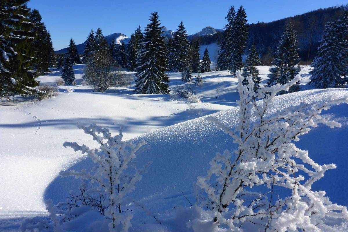 Almenrunde Schneeschuhtour©Josefine Lechner