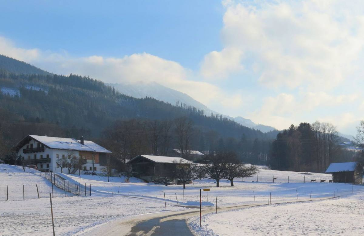 Irlach Rotwild Winter ©Brigitte Kolbeck